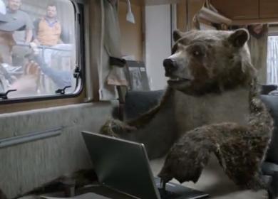 canal+-the-bear