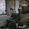 canal+-the-bear